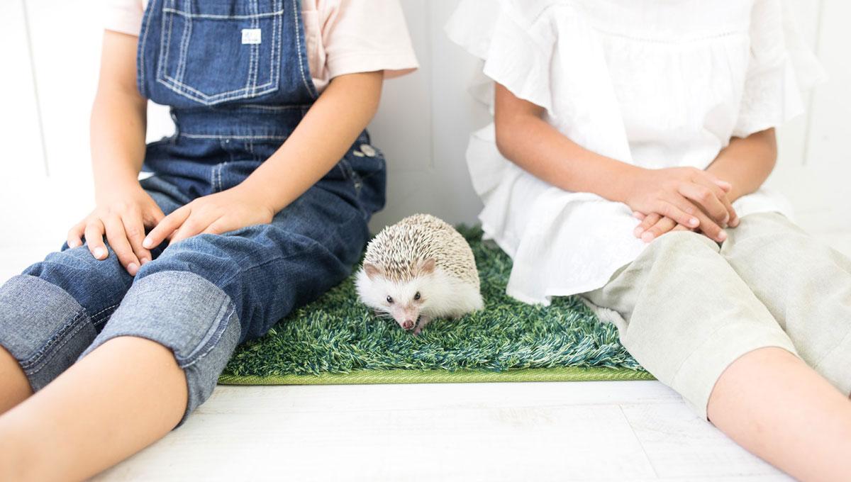 知的好奇心を伸ばすプレゼントはいかが? 子どもと楽しめる「せつない動物図鑑」