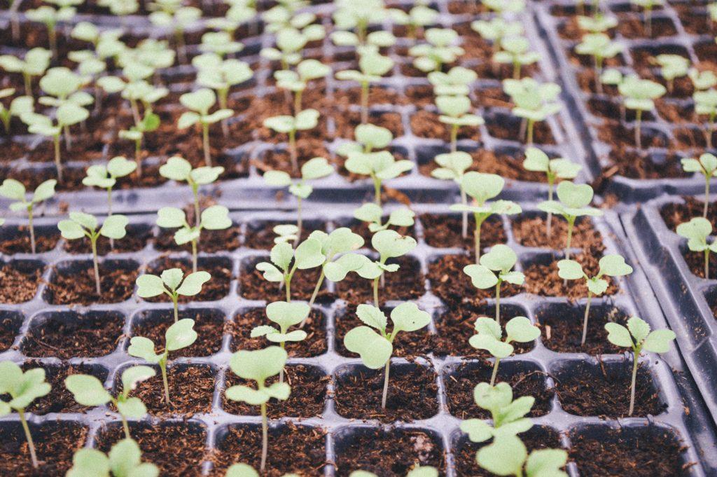 野菜ぎらいを直すコツ・野菜を育てて収穫する
