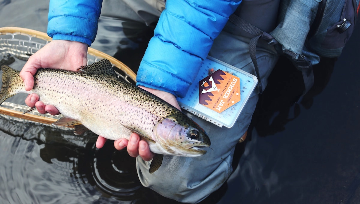 子どもと釣りに挑戦しよう! 現代っ子が学べる3つのこと