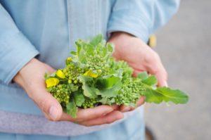 菜の花画像