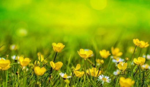 春を存分に楽しもう! 子どもと丸一日遊べる、柏の葉公園