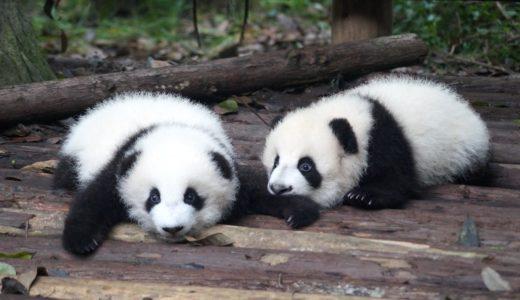 子連れで上野動物園へ行くならチェック! 持ち物&必須スポット
